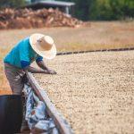 コーヒー生豆の成分構成について
