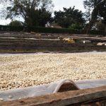 ケニアコーヒーの特徴