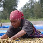パプアニューギニアコーヒーの特徴