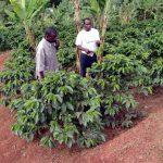 マラウイコーヒーの特徴